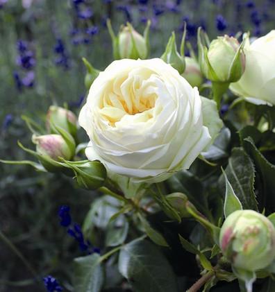 Rosa Wedding Piano1.jpg