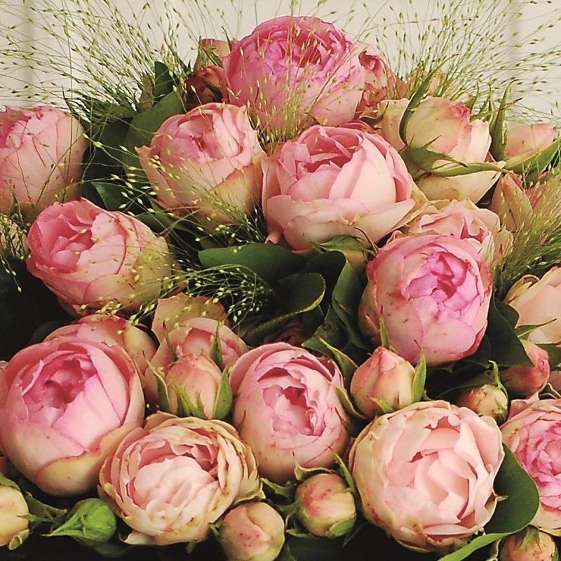 Rosa Lovely Rokoko2.jpg