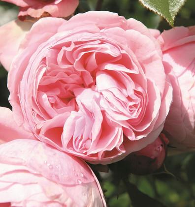 Rosa Giardina2.jpg