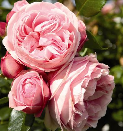 Rosa Giardina3.jpg
