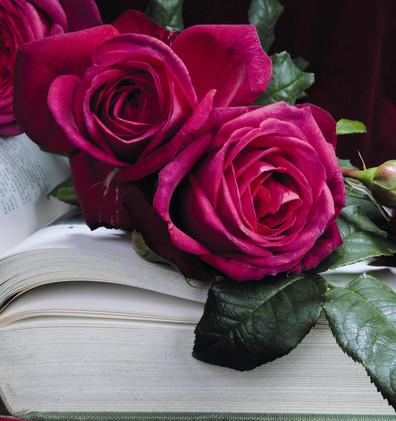 Rosa J.W. von Goethe Rose2.jpg