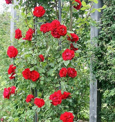 Rosa Santana3.jpg