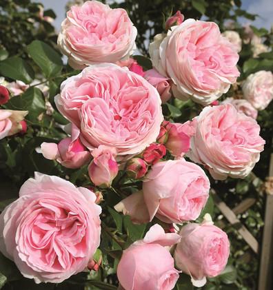 Rosa Giardina1.jpg
