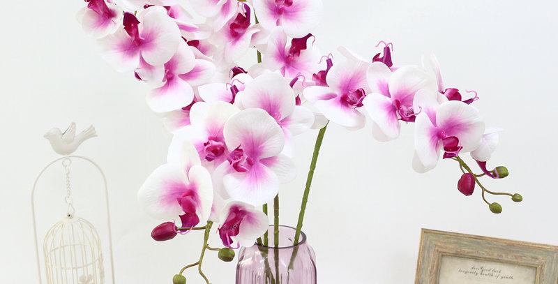 Орхидея Барселона
