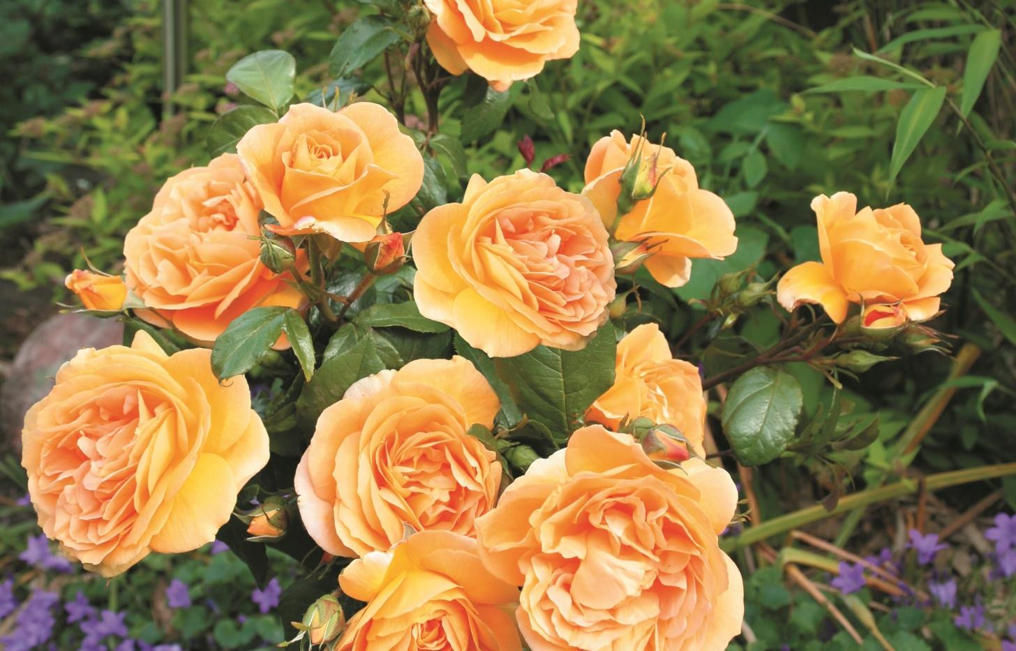 Rosa Bernstein2.jpg