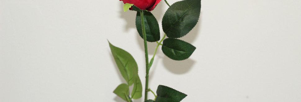 Роза Торонто красная