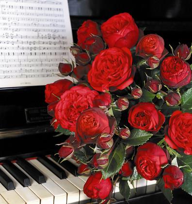 Rosa Piano3.jpg