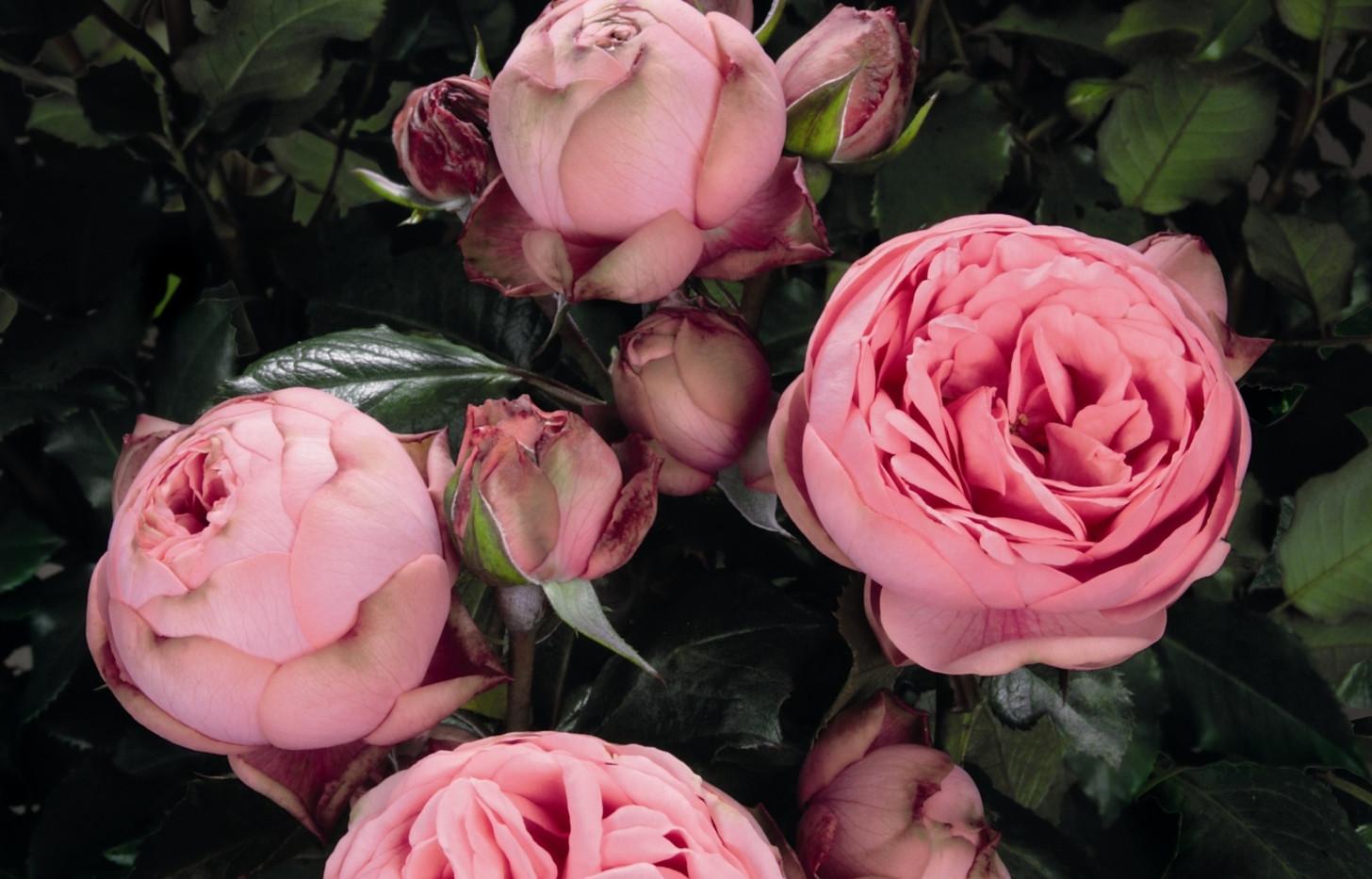 Rosa Happy Piano1.jpg