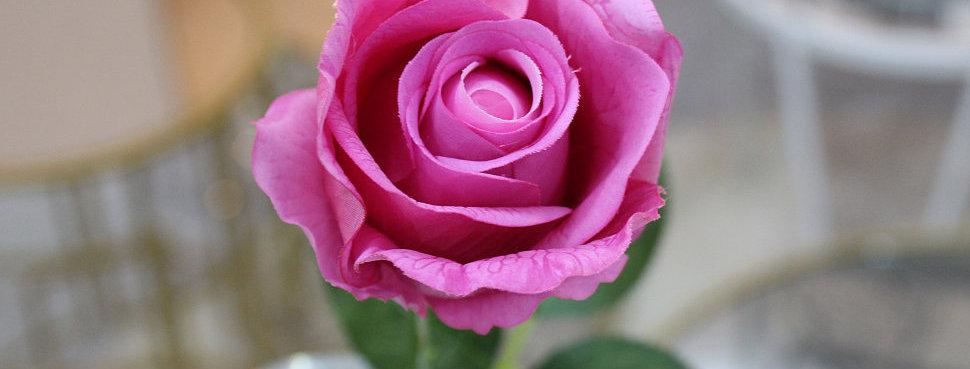 Роза одиночная малиновая