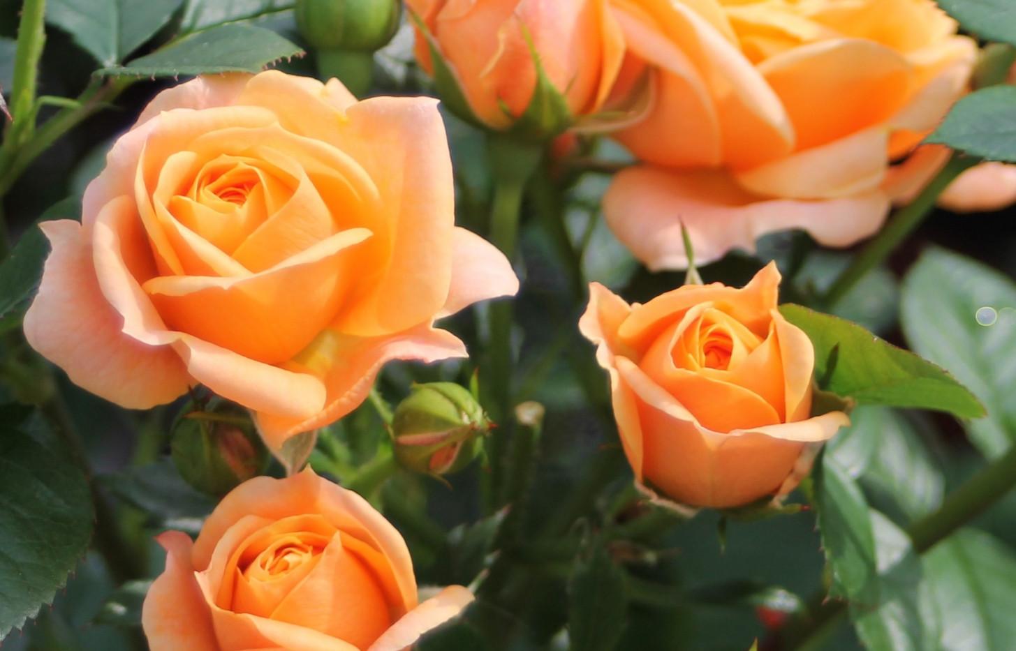 Rosa Bernstein1.jpg