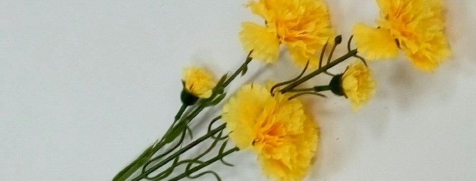 Гвоздика кустовая желтая