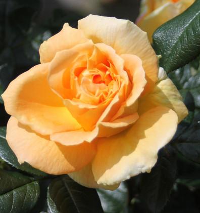 Rosa Bernstein3.jpg