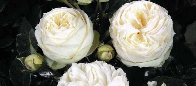 Rosa Wedding Piano2.jpg