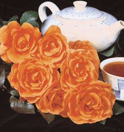 Rosa Tea Time2.jpg