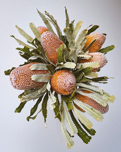 Bunch of native flowers, Banksia Prionotes