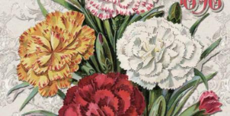Carnation Catalog