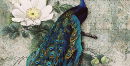 Peacock Majesty