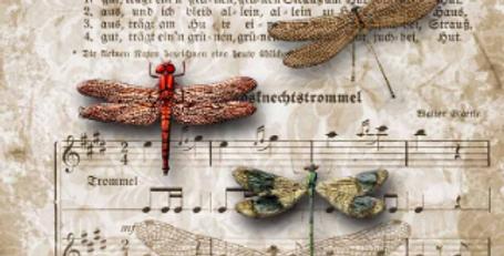 Dragonflies on Sheet Music