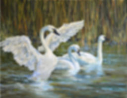 Cherry-tundra_swans_at_market_lake24x29_