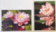 Water Lily Cardsjpg.jpg