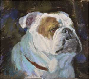 winston-the bulldog.jpg