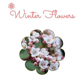 what flowers in winter.jpg