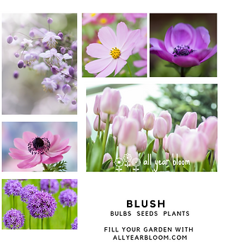 BLUSH bulbs seeds plants.png