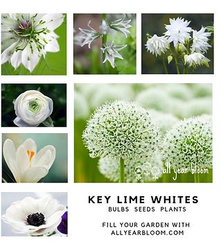 KLW bulbs seeds plants.png