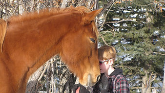 The Luaxophy Method.  Horses of Liberty Stables, Millarville Alberta.