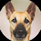 Sleep Ambassador - Chimera Dog