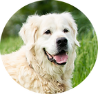 Sleep Ambassador - Rufus Dog