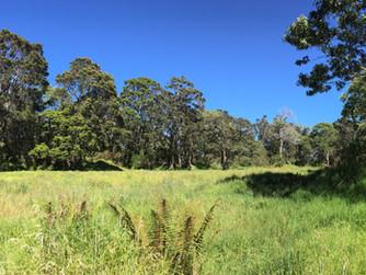 Bird-watching trip - Hakalau Forest