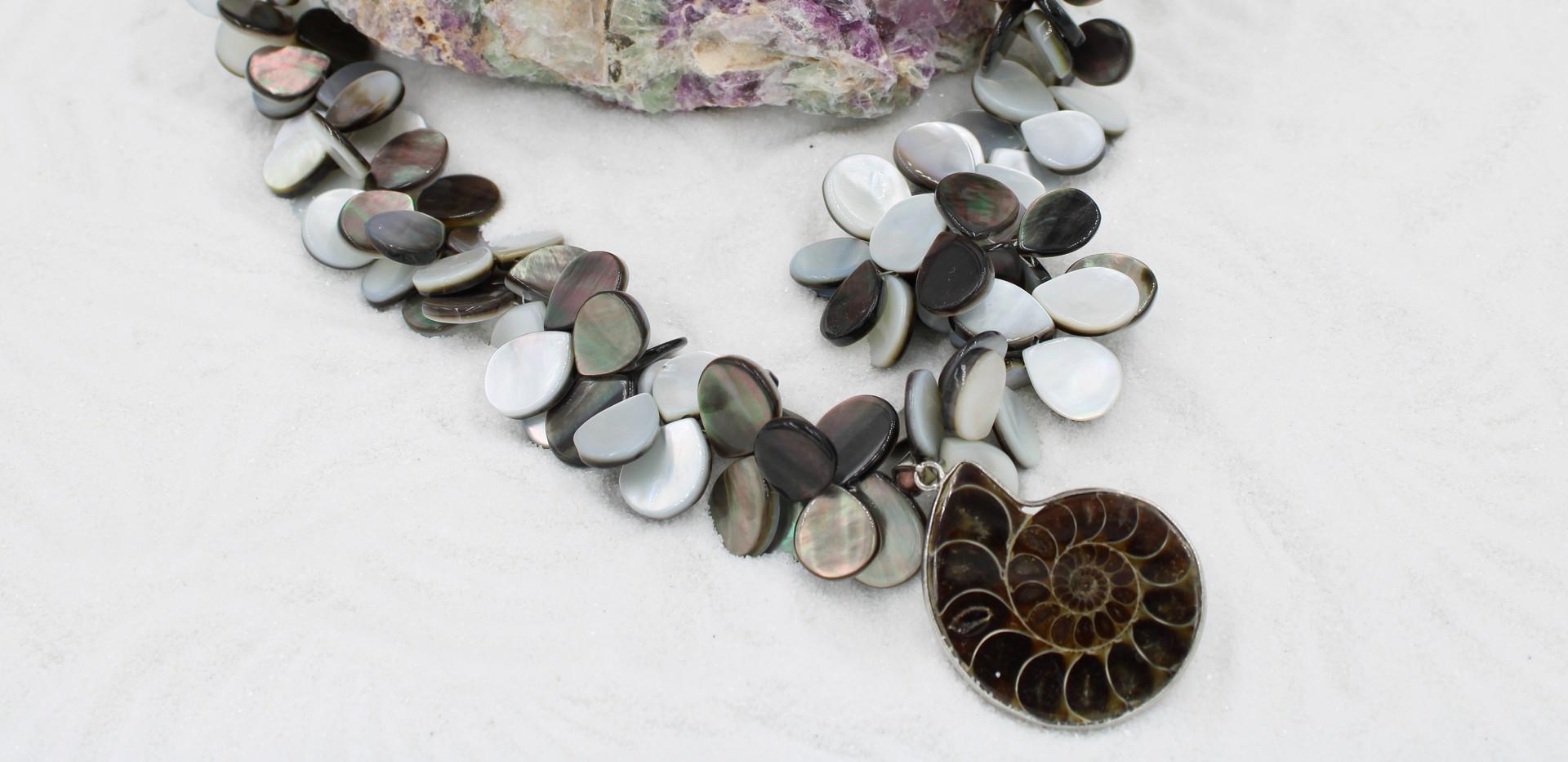 Ammonite and Abalone
