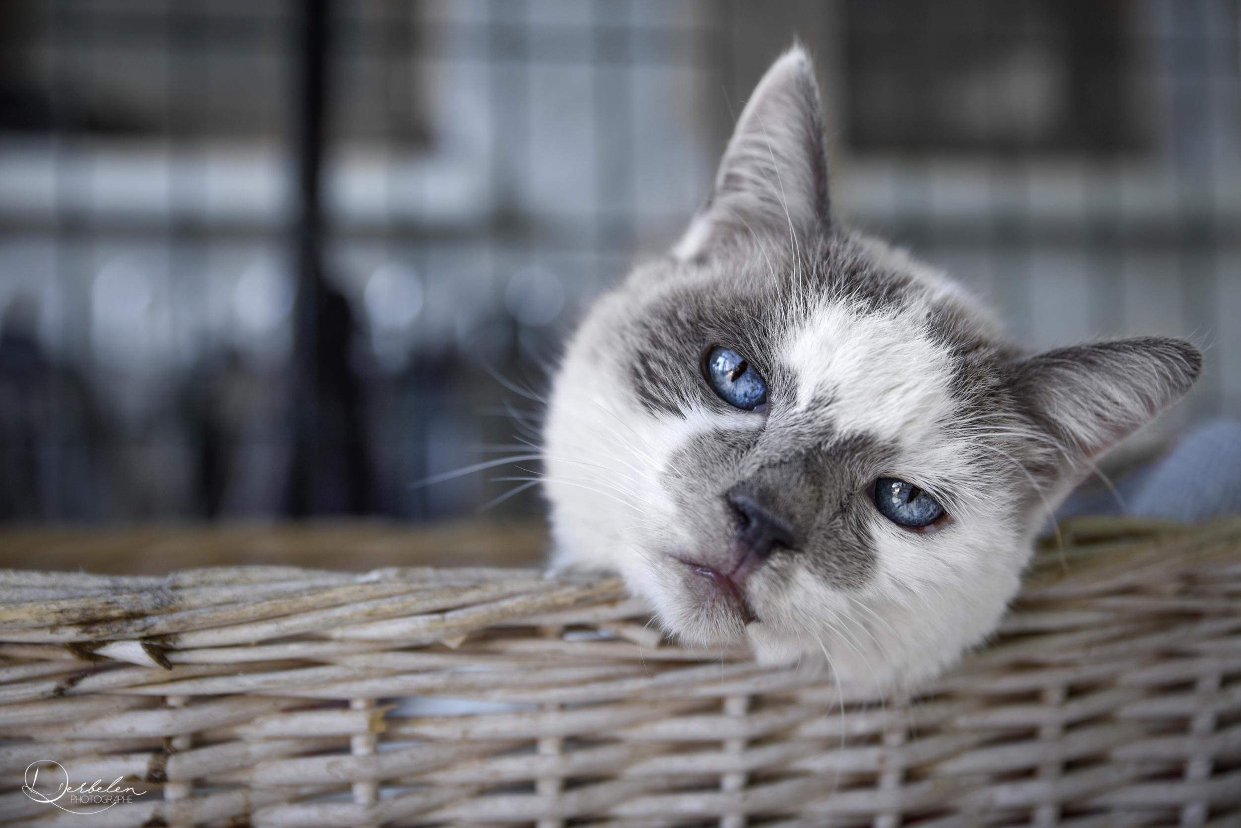 Le chat sans corps