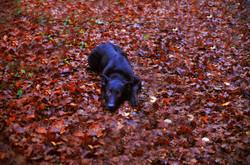 Mer de feuilles