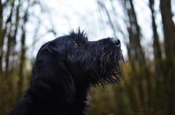 Portrait d'un chasseur