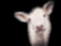 Goat_California Handmade Soaps_2.png
