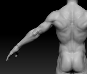 Anatomy_Male_4.jpg