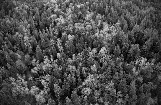 Land8.jpg