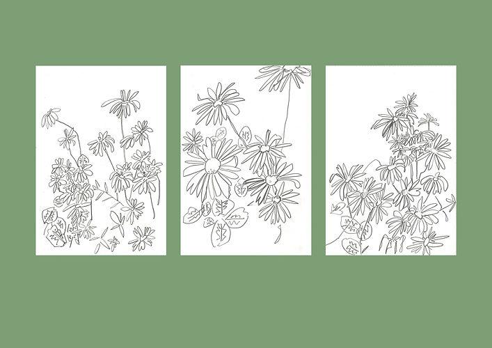 Daisies .jpg