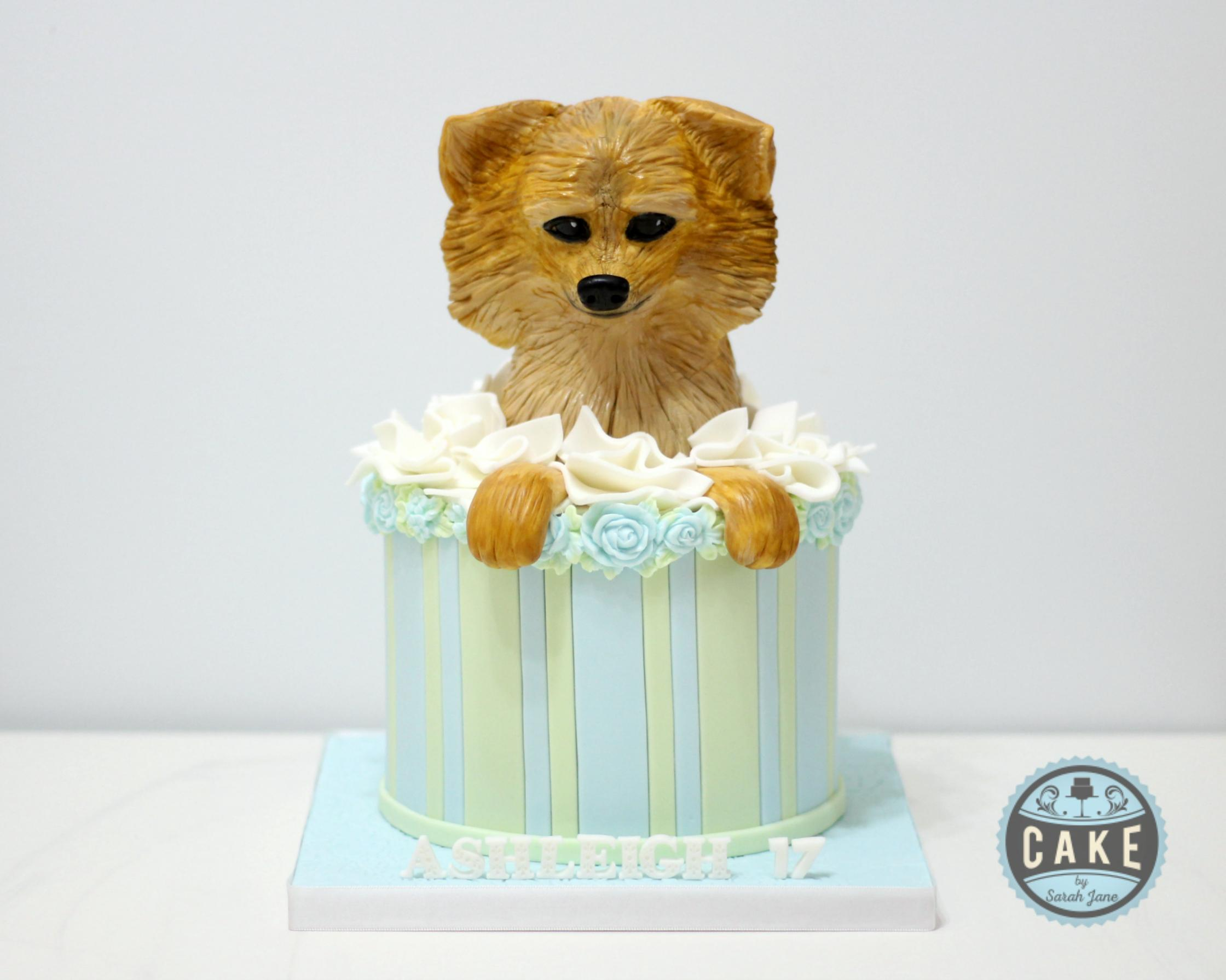 Pomeranian Puppy Box Cake