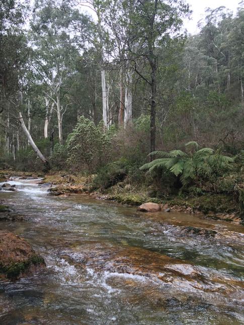 Upper Goulburn near Woods Point