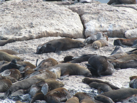 Seal Island Cruises