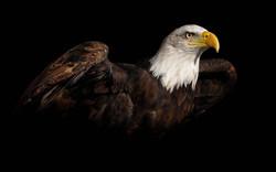 eagle-1024x640.jpg