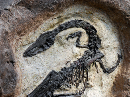 Fossil Surprises: Wrong Ages, Wrong Strata