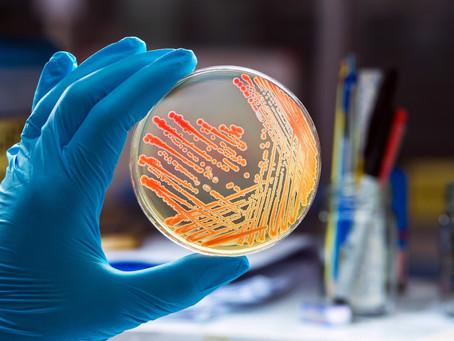 BioLogos Debate: Evolving Bacteria?