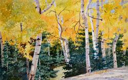 Autumn's Golden Aspen