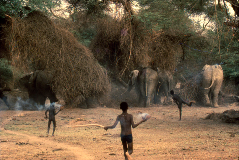 Boys Chasing Elephants from Farm Patch, Mali, 1990