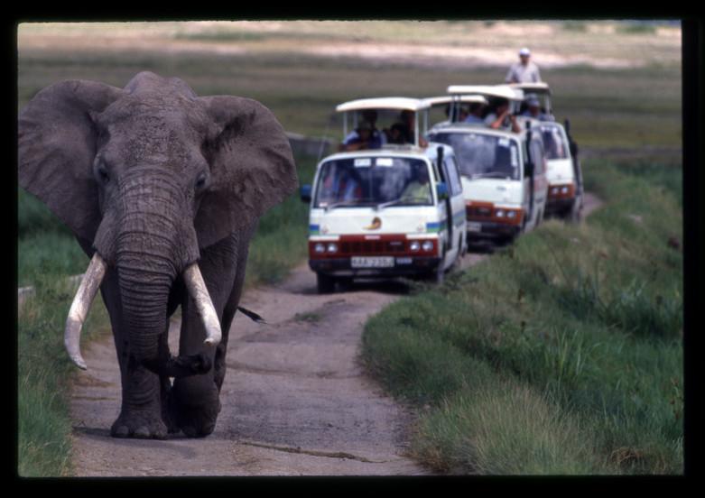 Elephant with Safari Bus Traffic Amboseli, Kenya, 1989