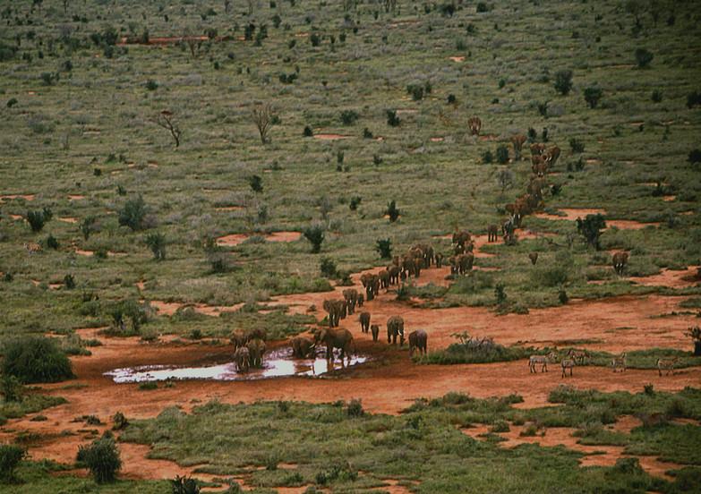 Aerial Elephants, Outside Tsavo East, Kenya, 1989